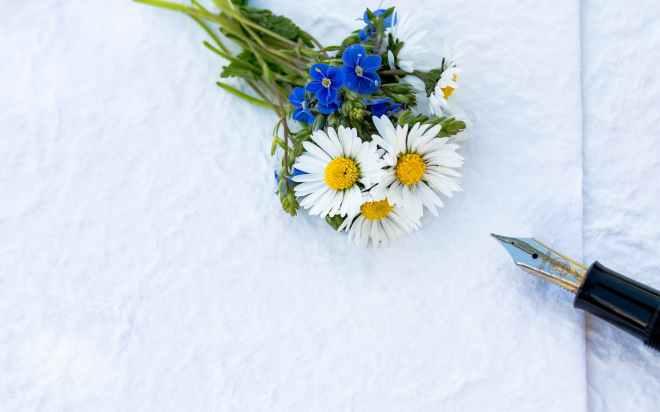 close up daisy flora flowers