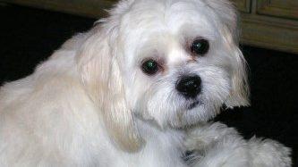 Pet Owner~ What Certain Dog BehaviorsMean