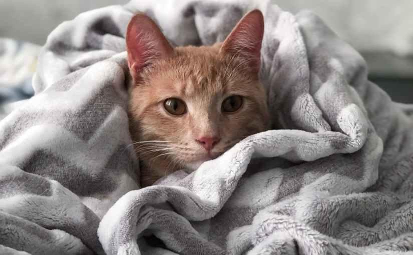 orange tabby cat on gray blanket